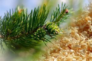 Применение биоактивных концентратов из биомассы дерева в косметологии